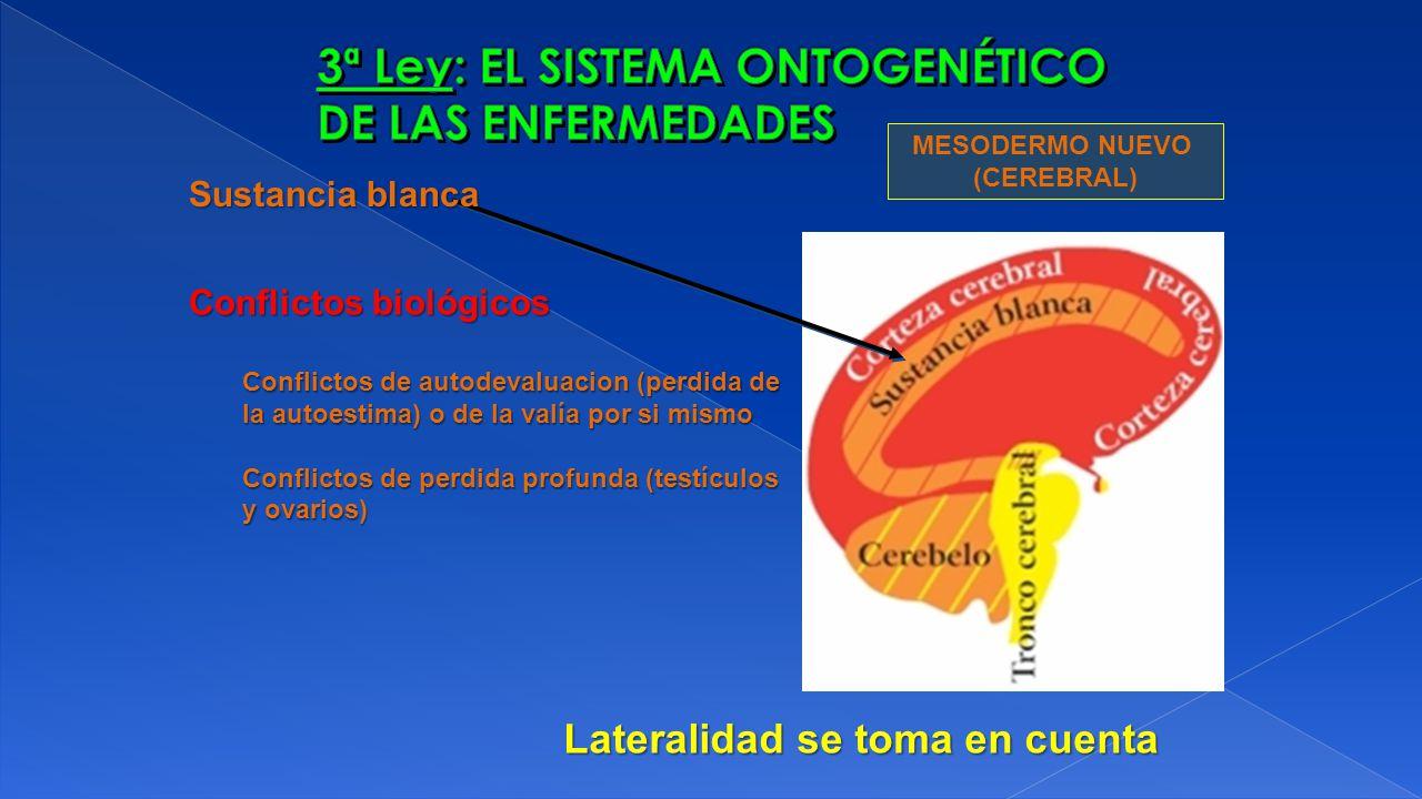 MESODERMO NUEVO (CEREBRAL) Sustancia blanca Conflictos biológicos Conflictos de autodevaluacion (perdida de la autoestima) o de la valía por si mismo