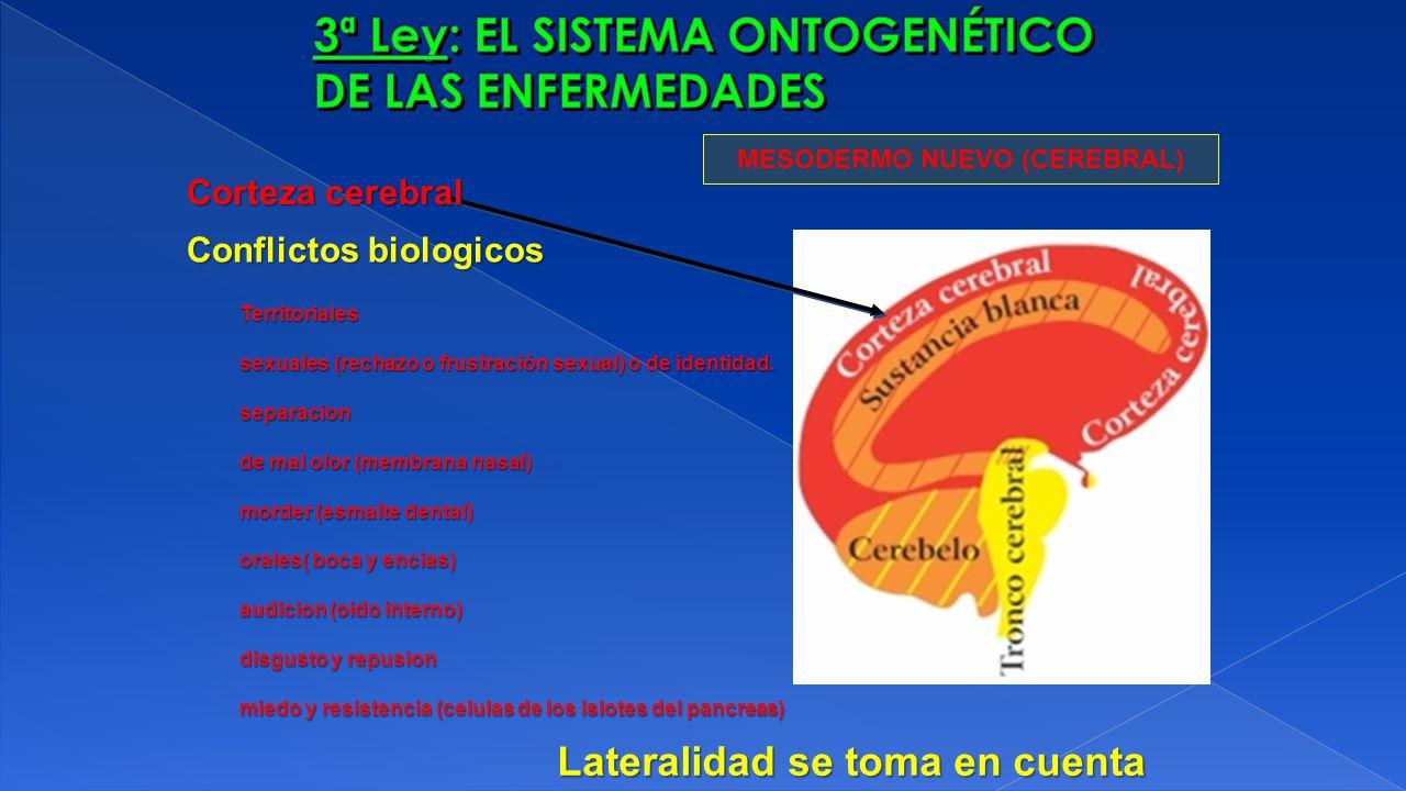 MESODERMO NUEVO (CEREBRAL) Corteza cerebral Conflictos biologicos Territoriales sexuales (rechazo o frustración sexual) o de identidad. separacion de