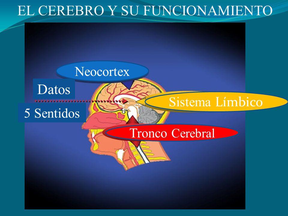EL CEREBRO Y SU FUNCIONAMIENTO Datos 5 Sentidos Neocortex Sistema Límbico Tronco Cerebral