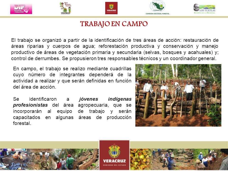 El trabajo se organizó a partir de la identificación de tres áreas de acción: restauración de áreas riparias y cuerpos de agua; reforestación producti