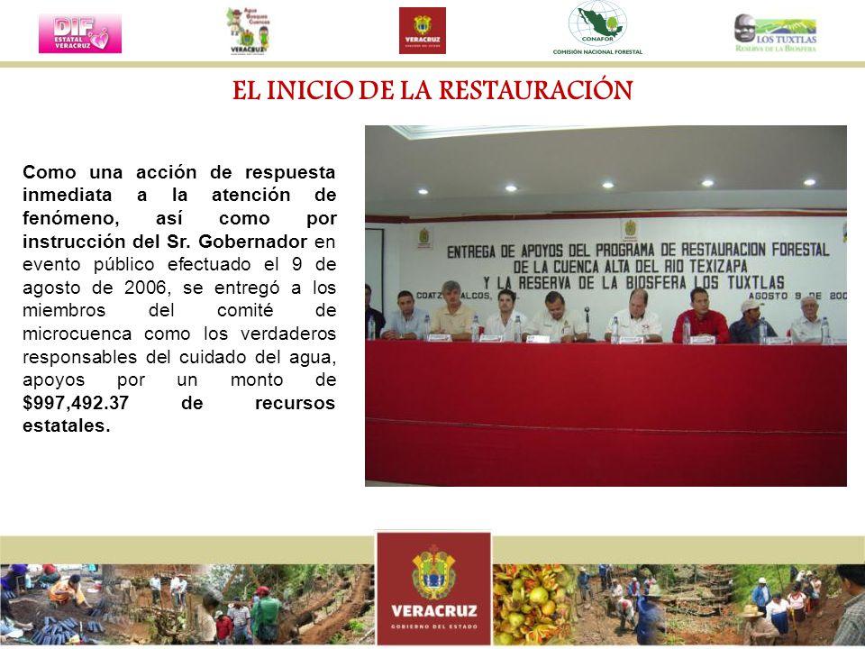 El trabajo se organizó a partir de la identificación de tres áreas de acción: restauración de áreas riparias y cuerpos de agua; reforestación productiva y conservación y manejo productivo de áreas de vegetación primaria y secundaria (selvas, bosques y acahuales) y; control de derrumbes.