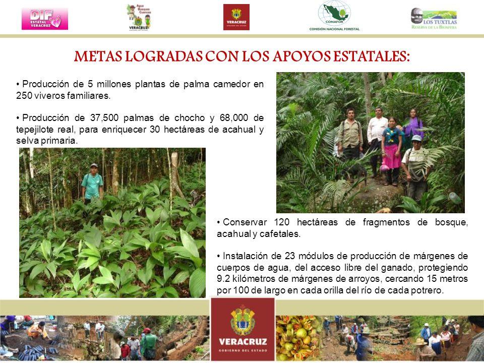 METAS LOGRADAS CON LOS APOYOS ESTATALES: Producción de 5 millones plantas de palma camedor en 250 viveros familiares. Producción de 37,500 palmas de c