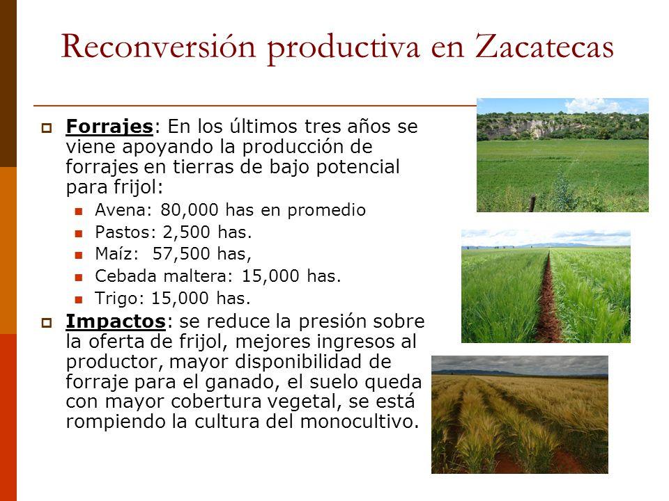 Reconversión productiva en Zacatecas Forrajes: En los últimos tres años se viene apoyando la producción de forrajes en tierras de bajo potencial para