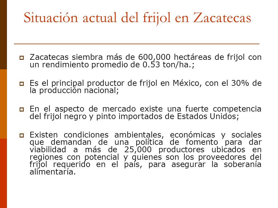 Situación actual del frijol en Zacatecas Zacatecas siembra más de 600,000 hectáreas de frijol con un rendimiento promedio de 0.53 ton/ha.; Es el princ