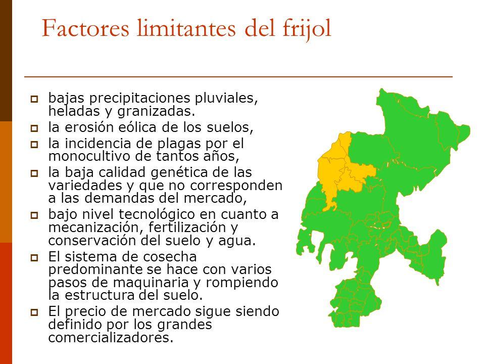 Factores limitantes del frijol bajas precipitaciones pluviales, heladas y granizadas. la erosión eólica de los suelos, la incidencia de plagas por el
