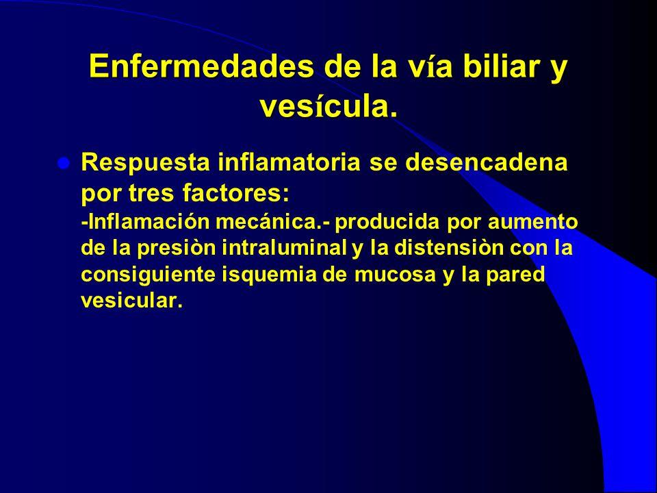 Enfermedades de la v í a biliar y ves í cula. Respuesta inflamatoria se desencadena por tres factores: -Inflamación mecánica.- producida por aumento d