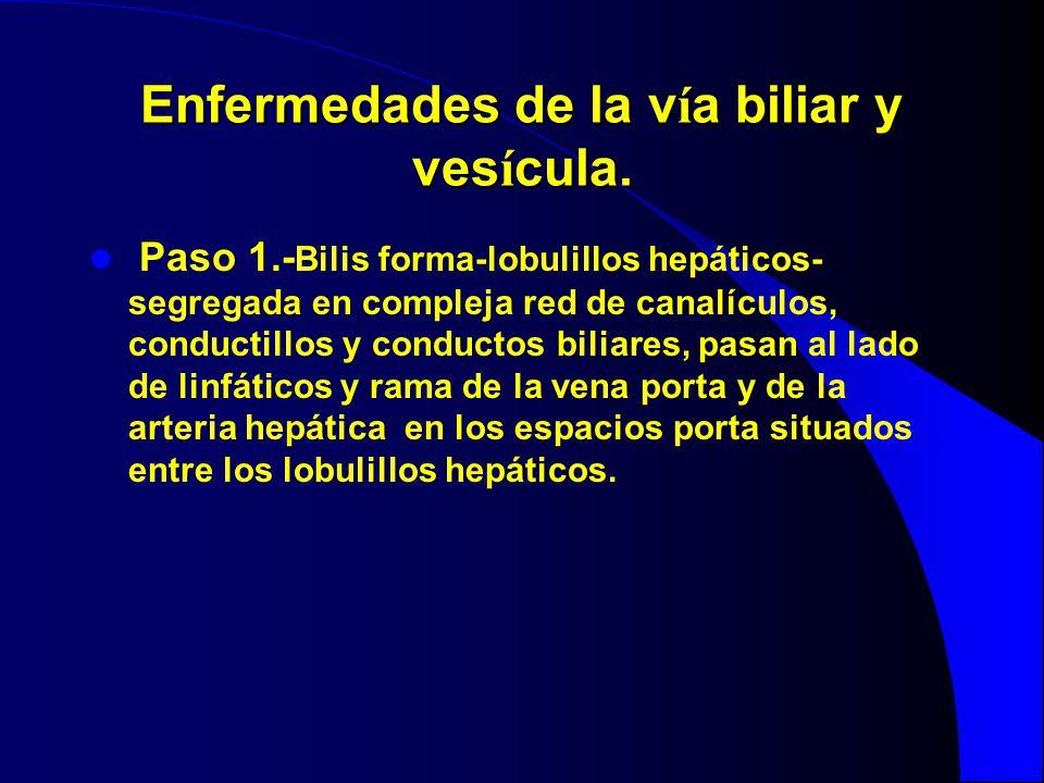 Enfermedades de la v í a biliar y ves í cula. Paso 1.- Bilis forma-lobulillos hepáticos- segregada en compleja red de canalículos, conductillos y cond