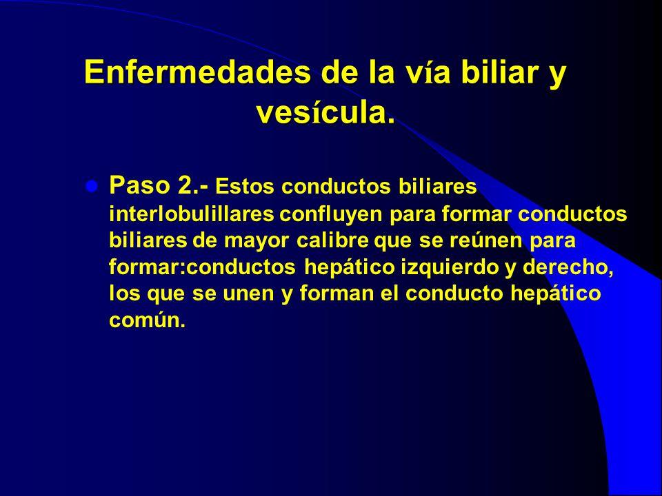 Enfermedades de la v í a biliar y ves í cula. Paso 2.- Estos conductos biliares interlobulillares confluyen para formar conductos biliares de mayor ca