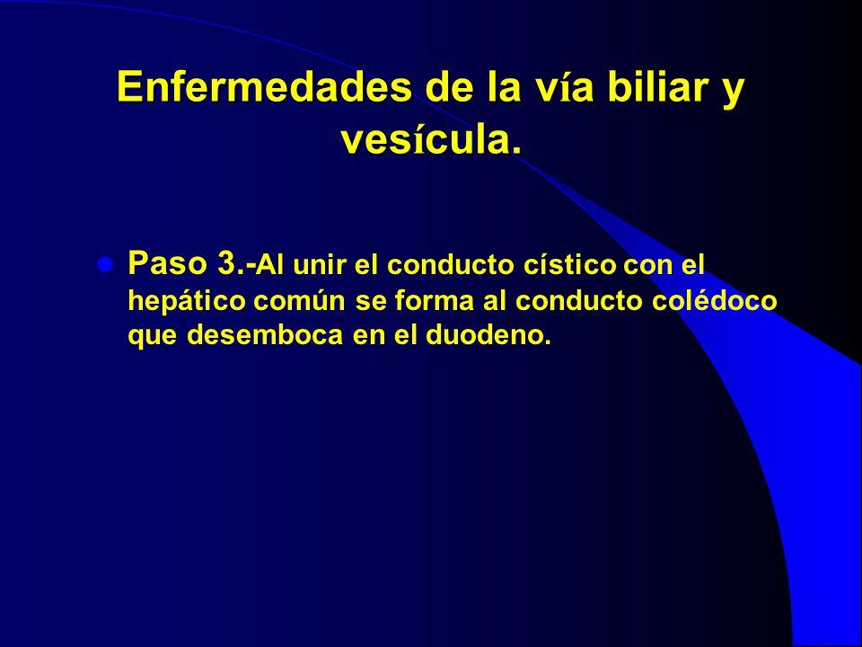 Enfermedades de la v í a biliar y ves í cula. Paso 3.- Al unir el conducto cístico con el hepático común se forma al conducto colédoco que desemboca e