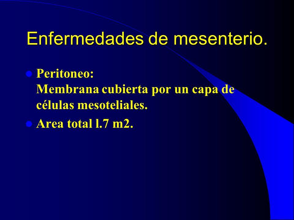 Enfermedades de mesenterio. Peritoneo: Membrana cubierta por un capa de células mesoteliales. Area total l.7 m2.