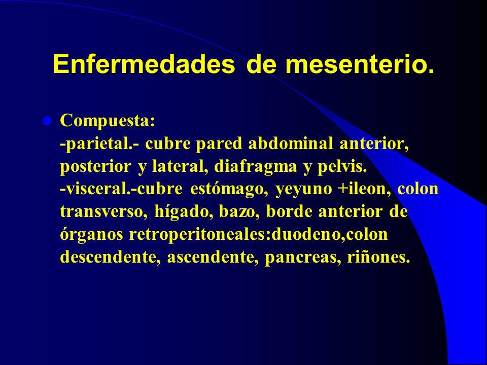 Enfermedades de mesenterio. Compuesta: -parietal.- cubre pared abdominal anterior, posterior y lateral, diafragma y pelvis. -visceral.-cubre estómago,