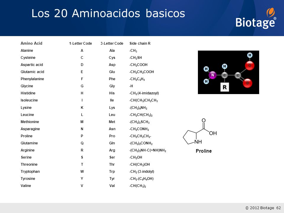 © 2012 Biotage 62 Los 20 Aminoacidos basicos Amino Acid 1-Letter Code 3-Letter CodeSide chain R AlanineAAla-CH 3 CysteineCCys-CH 2 SH Aspartic acidDAsp-CH 2 COOH Glutamic acidEGlu-CH 2 CH 2 COOH PhenylalanineFPhe-CH 2 C 6 H 5 GlycineGGly-H HistidineHHis-CH 2 (4-imidazoyl) IsoleucineIIle-CH(CH 3 )CH 2 CH 3 LysineKLys-(CH 2 ) 4 NH 2 LeucineLLeu-CH 2 CH(CH 3 ) 2 MethionineMMet-(CH 2 ) 2 SCH 3 AsparagineNAsn-CH 2 CONH 2 ProlinePPro-CH 2 CH 2 CH 2 - GlutamineQGln-(CH 2 ) 2 CONH 2 ArginineRArg-(CH 2 ) 3 NH-C(=NH)NH 2 SerineSSer-CH 2 OH ThreonineTThr-CH(CH 3 )OH TryptophanWTrp-CH 2 (3-indolyl) TyrosineYTyr-CH 2 -(C 6 H 4 OH) ValineVVal-CH(CH 3 ) 2 Proline