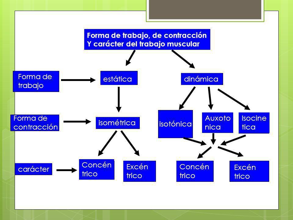 isotónica Forma de trabajo, de contracción Y carácter del trabajo muscular Forma de trabajo estáticadinámica Forma de contracción isométrica Auxoto ni