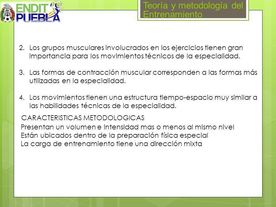 Teoría y metodología del Entrenamiento 2.Los grupos musculares involucrados en los ejercicios tienen gran importancia para los movimientos técnicos de