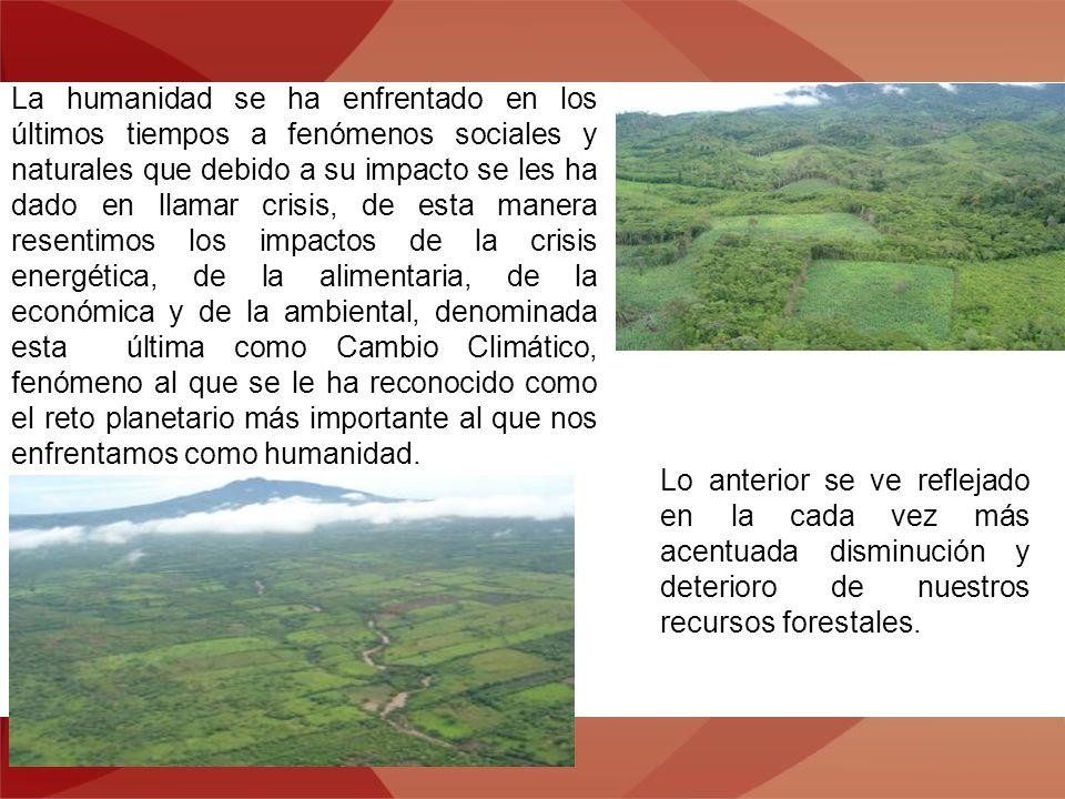 De igual manera entrego a Usted la recopilación de lo que ha sido la aplicación del Programa Forestal de Veracruz, denominado Iniciativa Veracruzana por el Agua, los Bosques y las Cuencas.