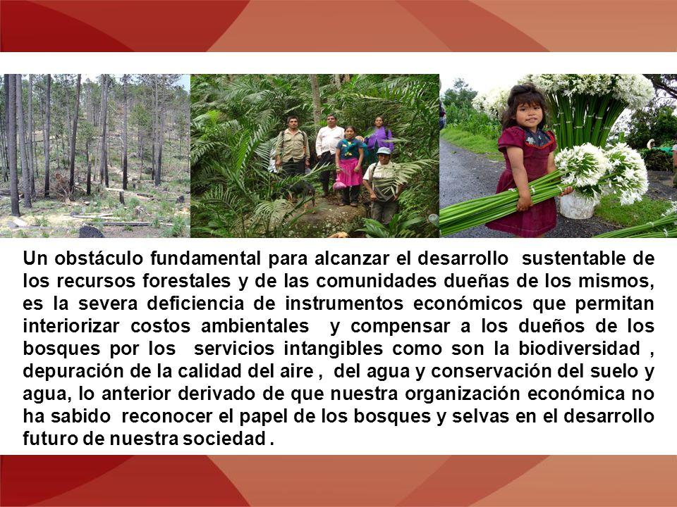 Un obstáculo fundamental para alcanzar el desarrollo sustentable de los recursos forestales y de las comunidades dueñas de los mismos, es la severa deficiencia de instrumentos económicos que permitan interiorizar costos ambientales y compensar a los dueños de los bosques por los servicios intangibles como son la biodiversidad, depuración de la calidad del aire, del agua y conservación del suelo y agua, lo anterior derivado de que nuestra organización económica no ha sabido reconocer el papel de los bosques y selvas en el desarrollo futuro de nuestra sociedad.
