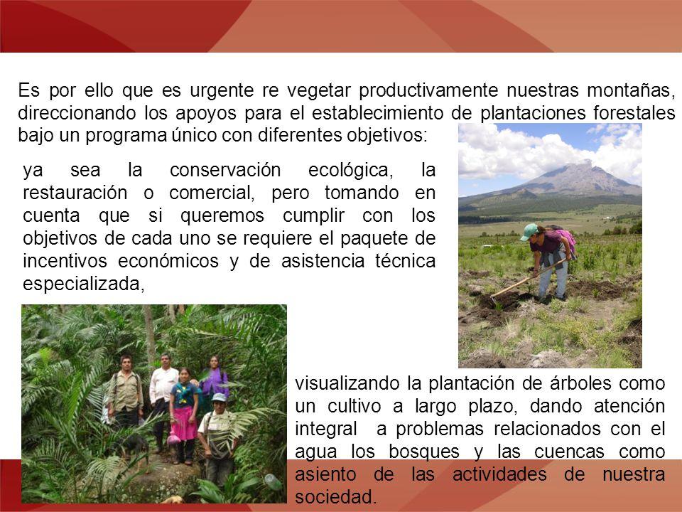 Es por ello que es urgente re vegetar productivamente nuestras montañas, direccionando los apoyos para el establecimiento de plantaciones forestales b
