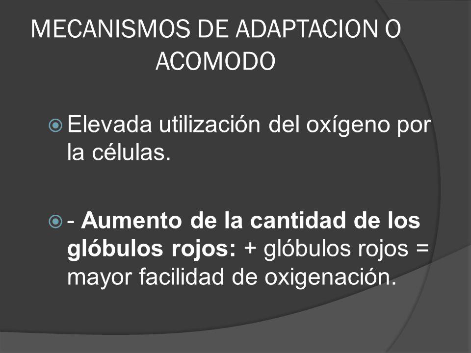 MECANISMOS DE ADAPTACION O ACOMODO Elevada utilización del oxígeno por la células. - Aumento de la cantidad de los glóbulos rojos: + glóbulos rojos =