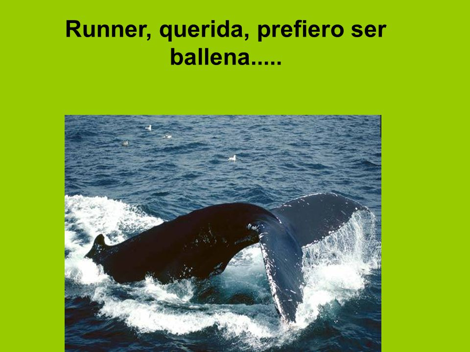 Runner, querida, prefiero ser ballena.....