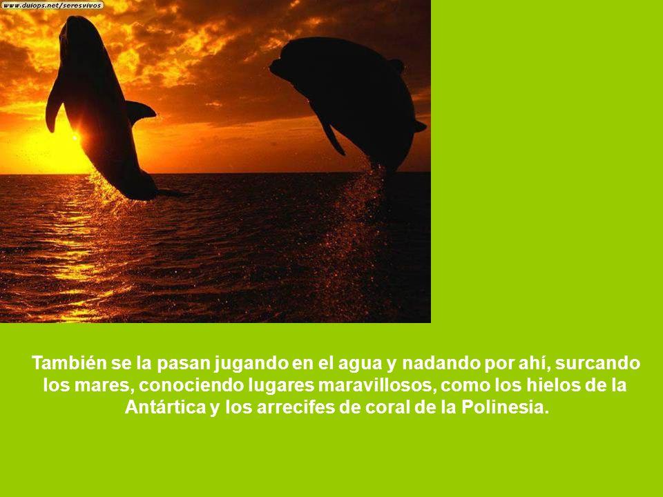 Las ballenas cantan muy bien y hasta tienen CD s grabados.
