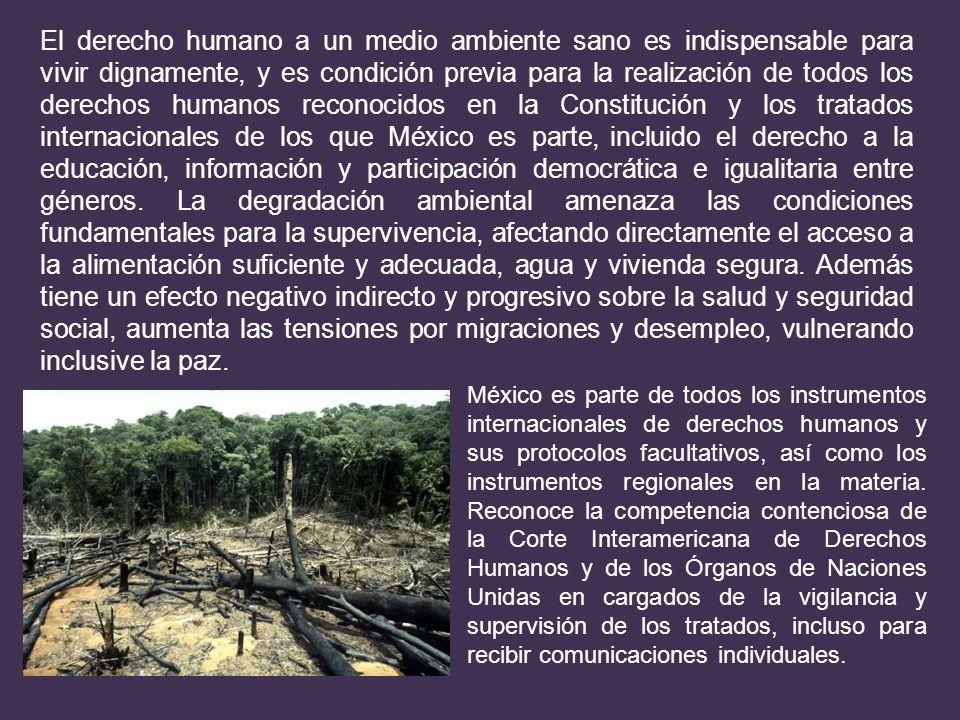 El derecho humano a un medio ambiente sano es indispensable para vivir dignamente, y es condición previa para la realización de todos los derechos hum