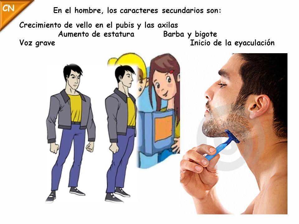 En el hombre, los caracteres secundarios son: Crecimiento de vello en el pubis y las axilas Aumento de estatura Barba y bigote Voz grave Inicio de la eyaculación