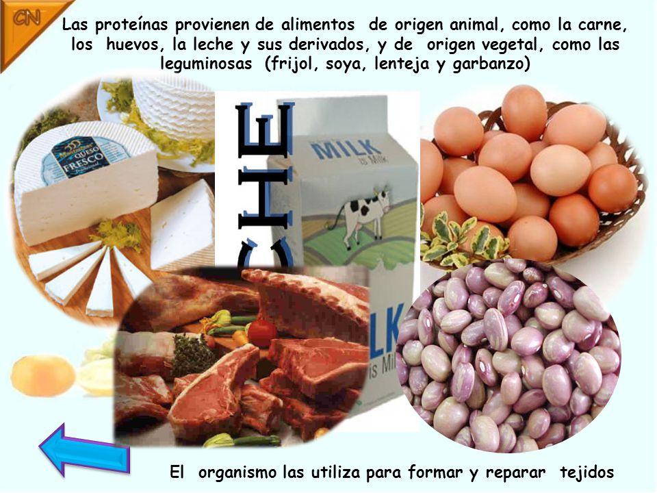 Las proteínas provienen de alimentos de origen animal, como la carne, los huevos, la leche y sus derivados, y de origen vegetal, como las leguminosas (frijol, soya, lenteja y garbanzo) El organismo las utiliza para formar y reparar tejidos