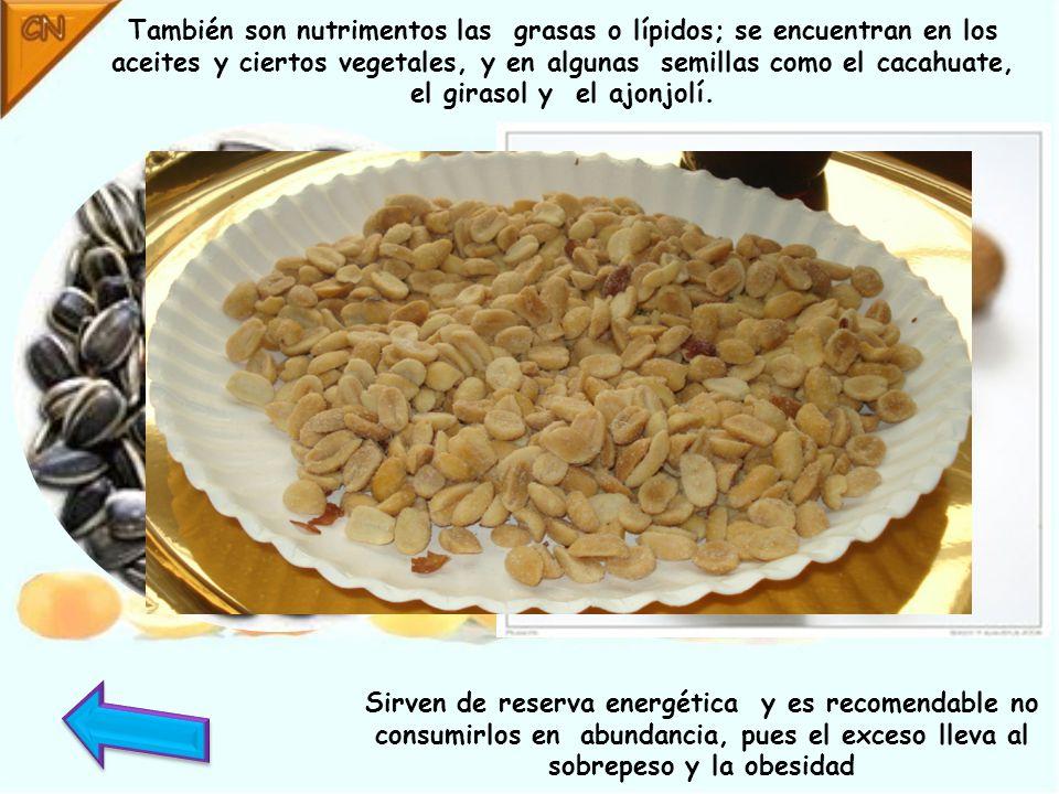 Los carbohidratos proporcionan energía y se encuentran principalmente en cereales como el maíz, el arroz, la avena y el trigo, en tubérculos como la papa, el camote y la yuca, y en menor cantidad en las frutas