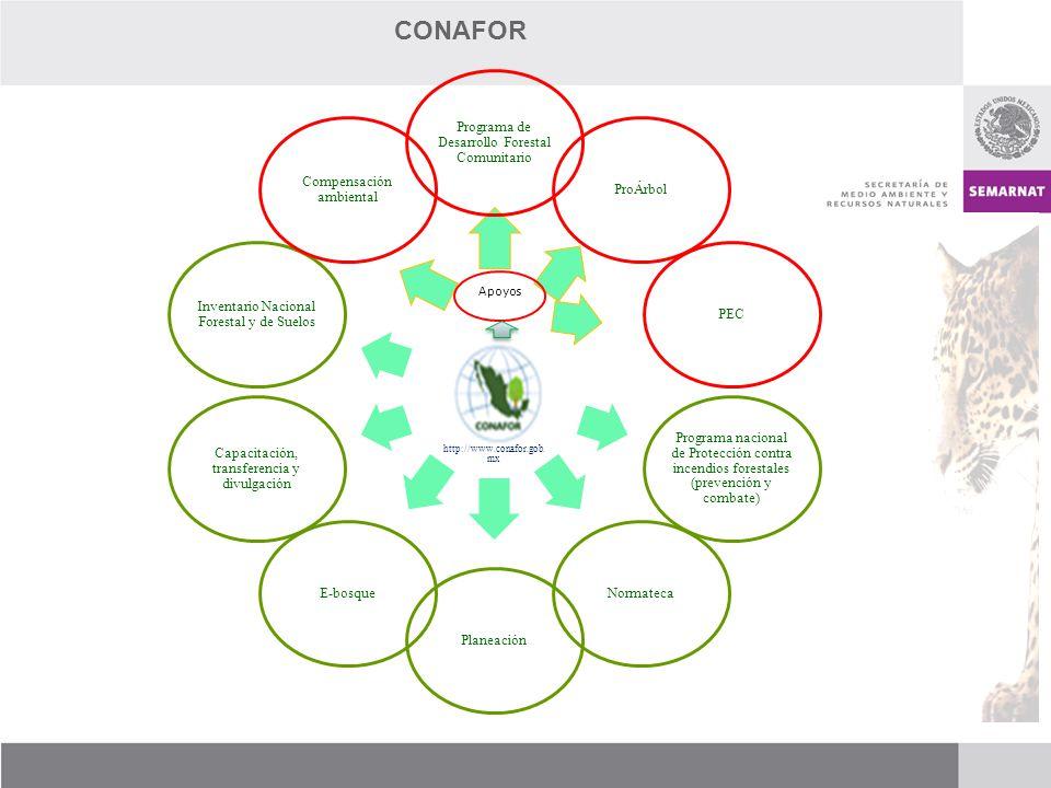 http://www.conafor.gob.mx Programa de Desarrollo Forestal Comunitario ProÁrbolPEC Programa nacional de Protección contra incendios forestales (prevenc