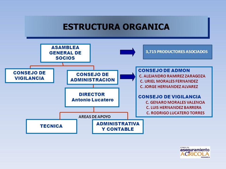 DIRECTOR Antonio Lucatero CONSEJO DE ADMINISTRACION CONSEJO DE VIGILANCIA ADMINISTRATIVA Y CONTABLE TECNICA AREAS DE APOYO 3,715 PRODUCTORES ASOCIADOS