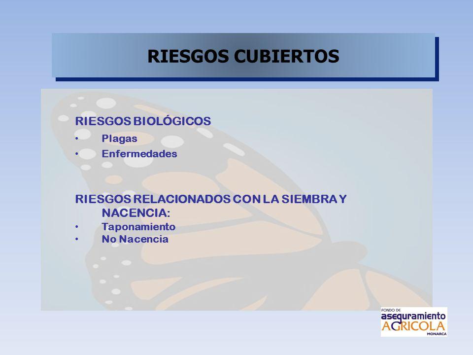 RIESGOS CUBIERTOS RIESGOS BIOLÓGICOS Plagas Enfermedades RIESGOS RELACIONADOS CON LA SIEMBRA Y NACENCIA: Taponamiento No Nacencia