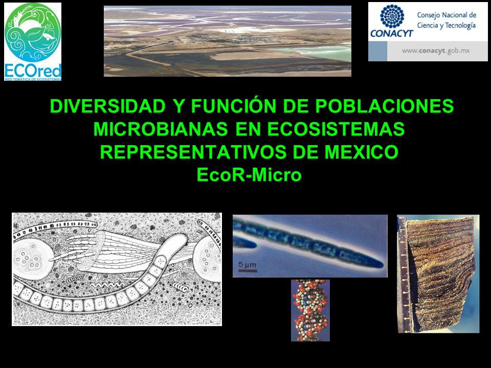 DIVERSIDAD Y FUNCIÓN DE POBLACIONES MICROBIANAS EN ECOSISTEMAS REPRESENTATIVOS DE MEXICO EcoR-Micro