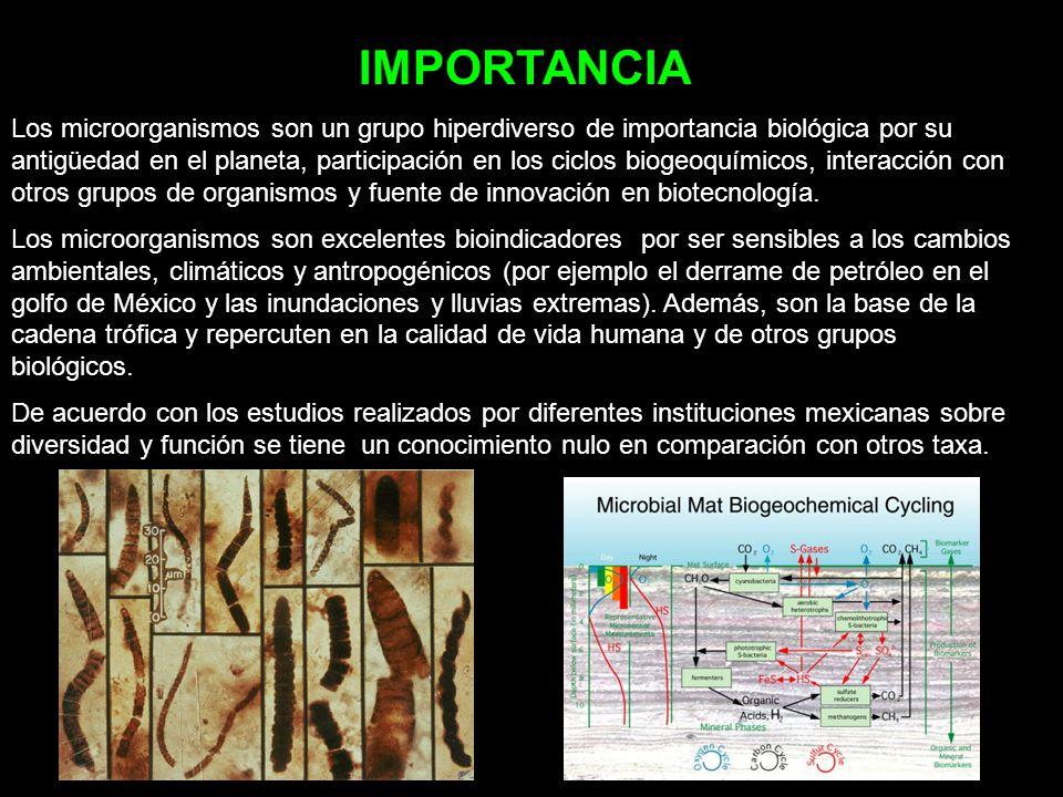 IMPORTANCIA Los microorganismos son un grupo hiperdiverso de importancia biológica por su antigüedad en el planeta, participación en los ciclos biogeo