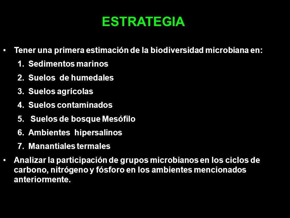 ESTRATEGIA Tener una primera estimación de la biodiversidad microbiana en: 1.Sedimentos marinos 2.Suelos de humedales 3.Suelos agrícolas 4.Suelos cont