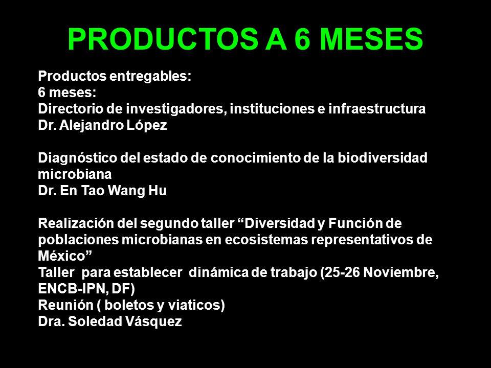 PRODUCTOS A 3 AñOS Elaboración de Propuesta de proyecto (6 meses) –Video conferencias & e-mail –Tercer taller de EcoR-Micro (UNAM-DF) Formación de recursos humanos: –2 Dr., 3 de maestría: En Tao –1 maestría & 2 licenciatura: Luis –1 Dr.