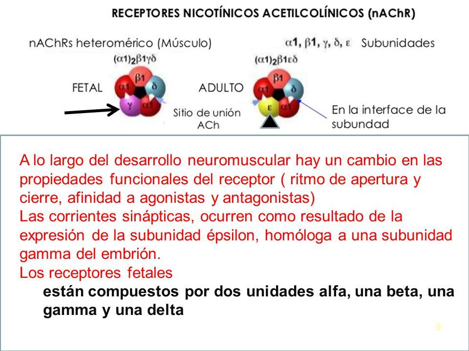 Anestesiologia Factores cambiantes La relación agua extra/intracelular.