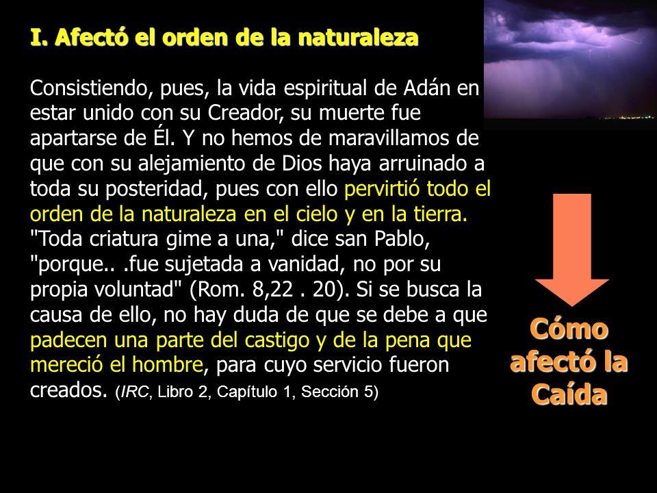 Cómo afectó la Caída I. Afectó el orden de la naturaleza Consistiendo, pues, la vida espiritual de Adán en estar unido con su Creador, su muerte fue a