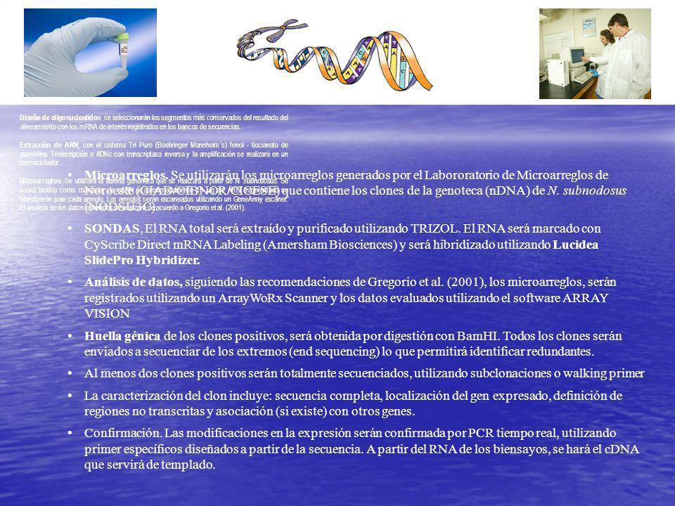 Diseño de oligonucleotidos : se seleccionarán los segmentos más conservados del resultado del alineamiento con los mRNA de interés registrados en los bancos de secuencias.