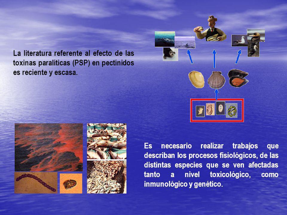 Hipótesis La caracterizacion de la expresión genica diferencial en los tejidos (hemolinfa, glándula digestiva y músculo aductor) de N.