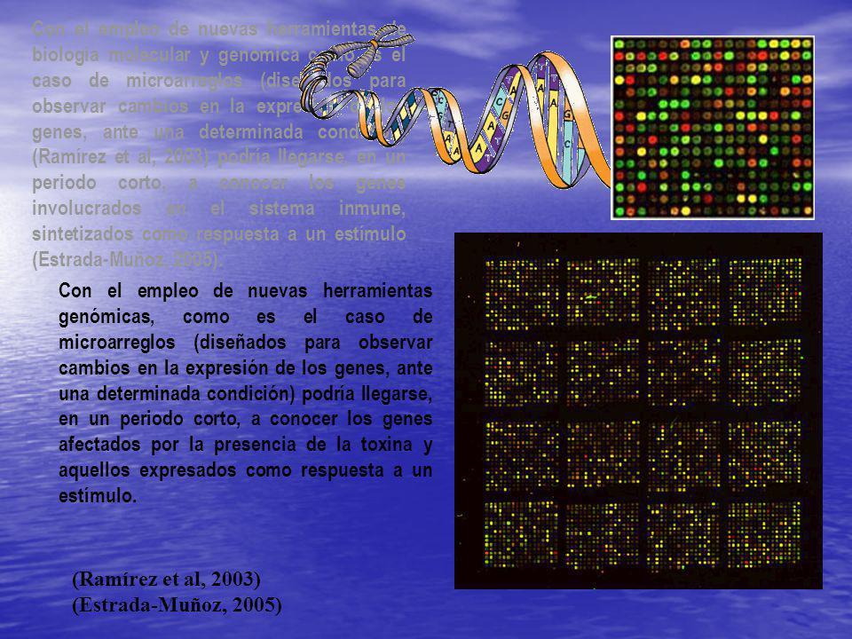 El presente estudio pretende la caracterización de la expresión génica de la almeja mano de león N.