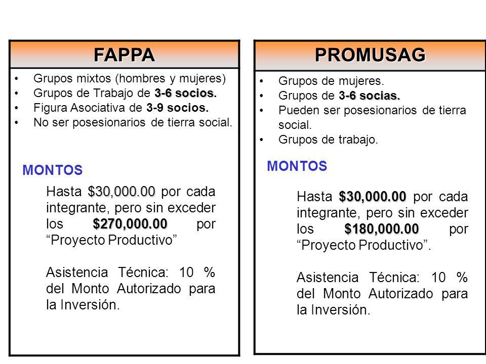 FAPPA Grupos mixtos (hombres y mujeres) 3-6 sociosGrupos de Trabajo de 3-6 socios. Figura Asociativa de 3-9 socios. No ser posesionarios de tierra soc