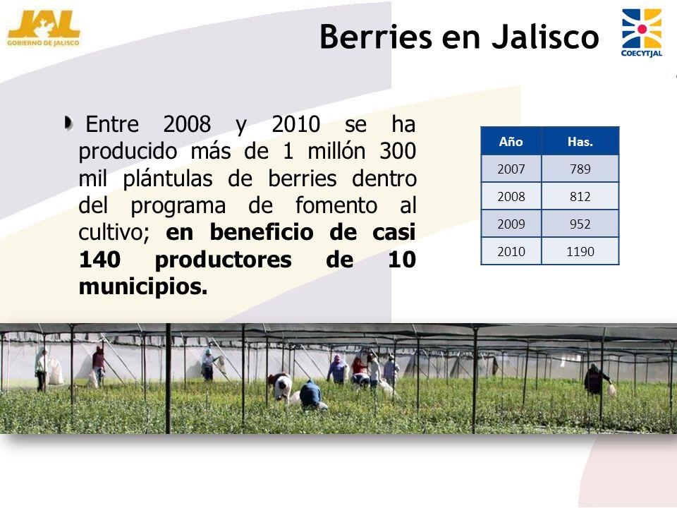 AñoHas. 2007789 2008812 2009952 20101190 Entre 2008 y 2010 se ha producido más de 1 millón 300 mil plántulas de berries dentro del programa de fomento