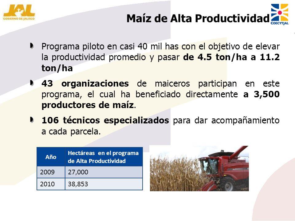 Maíz de Alta Productividad Año Hectáreas en el programa de Alta Productividad 200927,000 201038,853 Programa piloto en casi 40 mil has con el objetivo