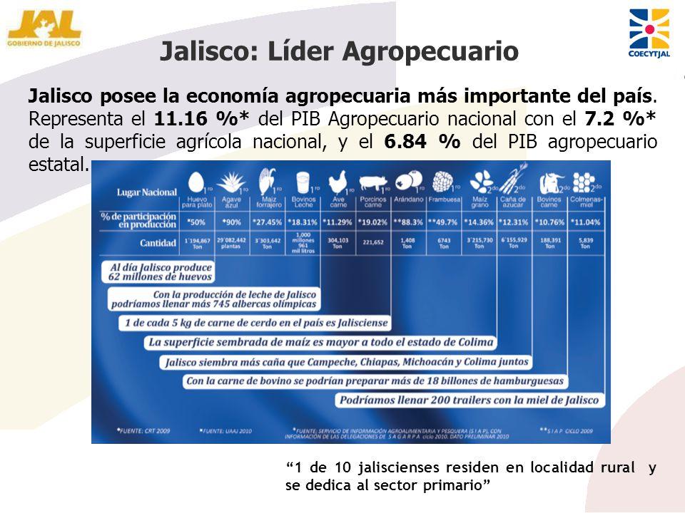 Jalisco posee la economía agropecuaria más importante del país. Representa el 11.16 %* del PIB Agropecuario nacional con el 7.2 %* de la superficie ag