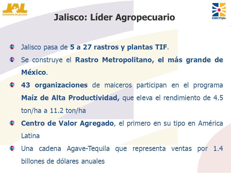 Jalisco pasa de 5 a 27 rastros y plantas TIF. Se construye el Rastro Metropolitano, el más grande de México. 43 organizaciones de maiceros participan