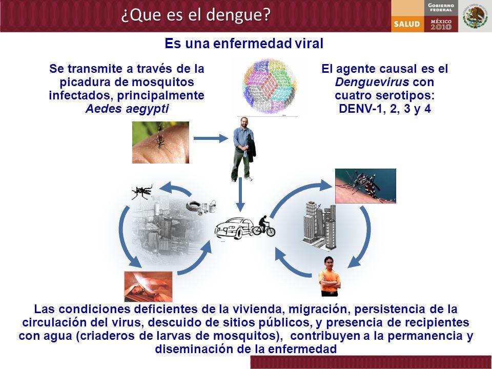 El agente causal es el Denguevirus con cuatro serotipos: DENV-1, 2, 3 y 4 Se transmite a través de la picadura de mosquitos infectados, principalmente