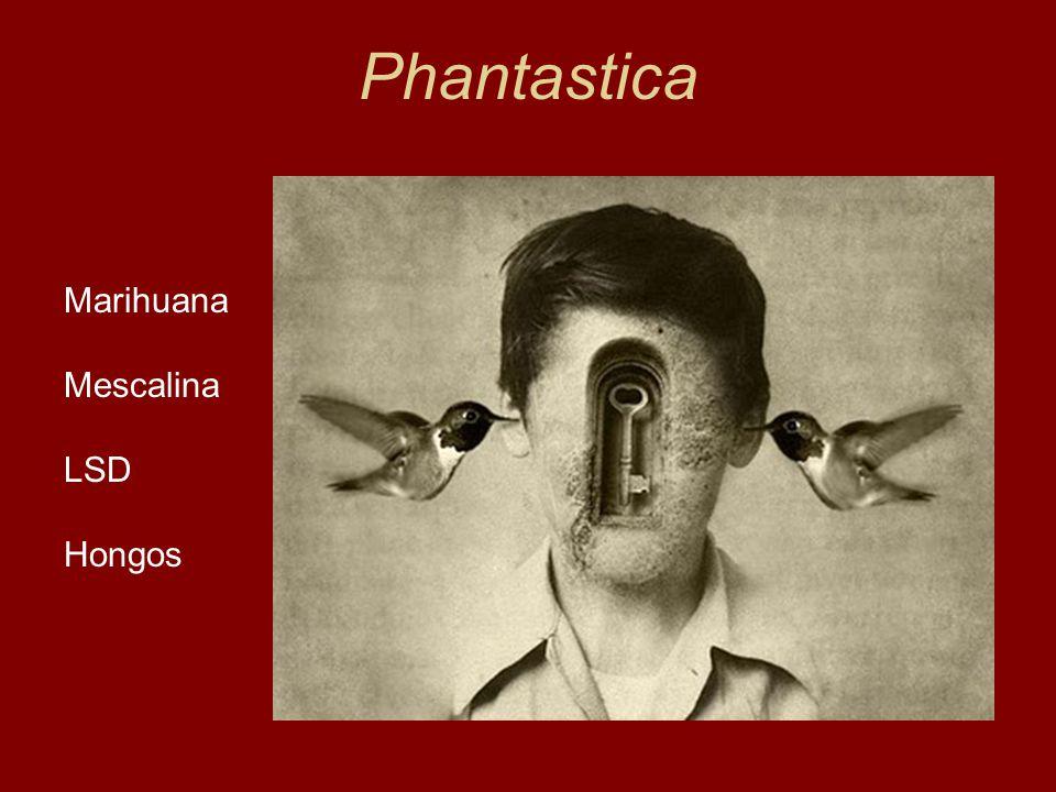Phantastica Marihuana Mescalina LSD Hongos