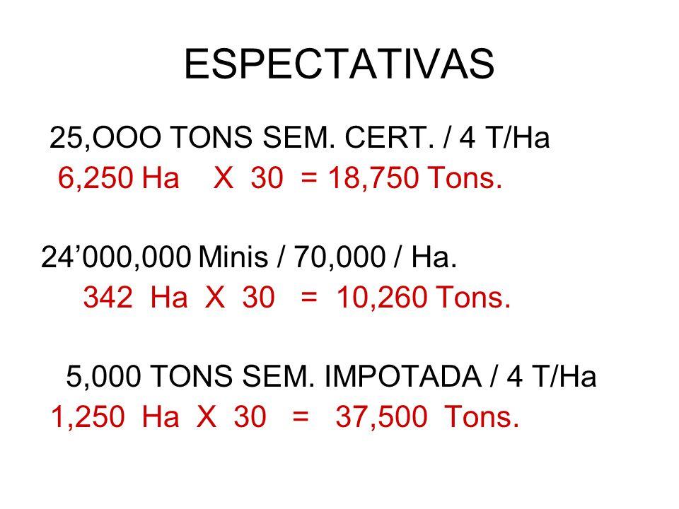 ESPECTATIVAS 25,OOO TONS SEM. CERT. / 4 T/Ha 6,250 Ha X 30 = 18,750 Tons. 24000,000 Minis / 70,000 / Ha. 342 Ha X 30 = 10,260 Tons. 5,000 TONS SEM. IM