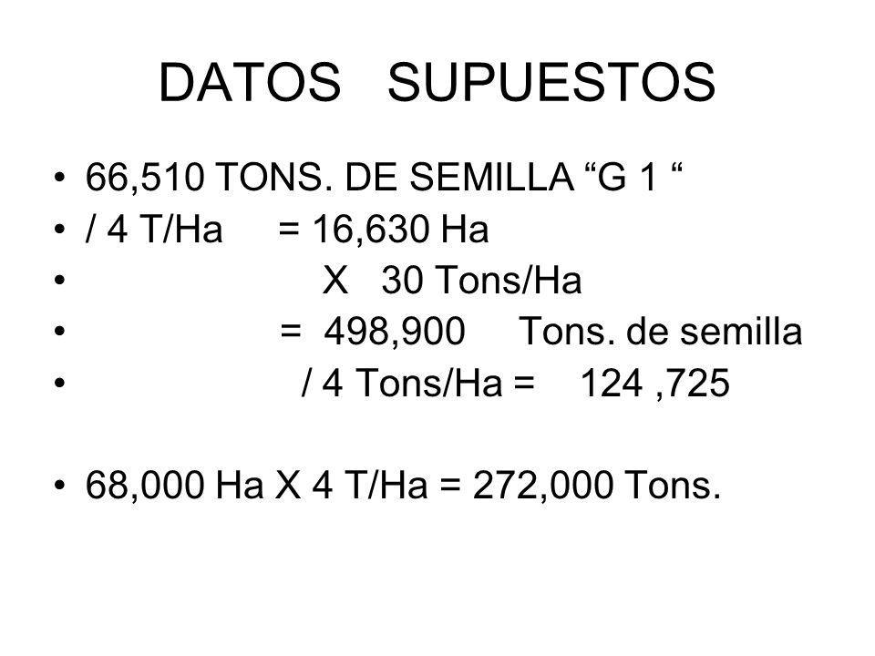 DATOS SUPUESTOS 66,510 TONS. DE SEMILLA G 1 / 4 T/Ha = 16,630 Ha X 30 Tons/Ha = 498,900 Tons. de semilla / 4 Tons/Ha = 124,725 68,000 Ha X 4 T/Ha = 27