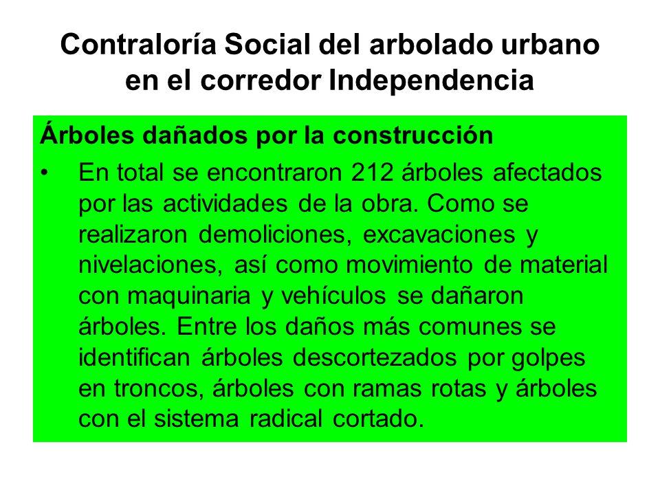 Contraloría Social del arbolado urbano en el corredor Independencia Árboles dañados por la construcción En total se encontraron 212 árboles afectados